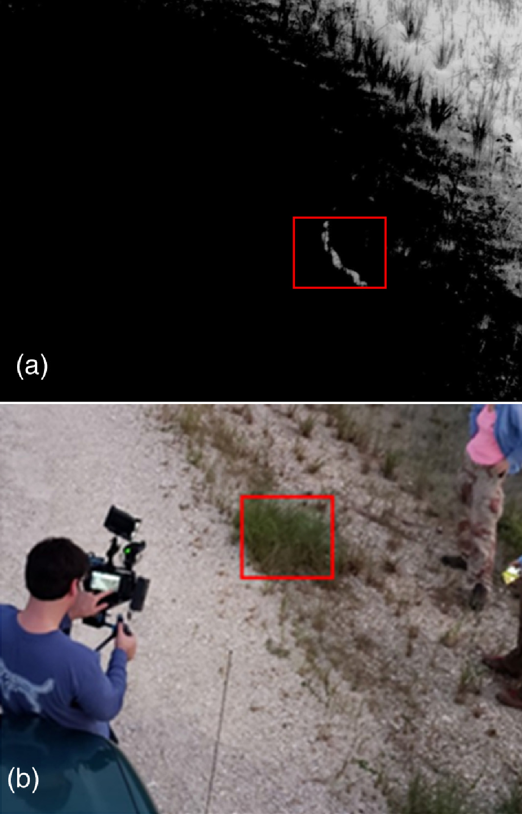 Burmese pythons image taken with NIR camera copy (top), traditional visible-light camera (bottom)