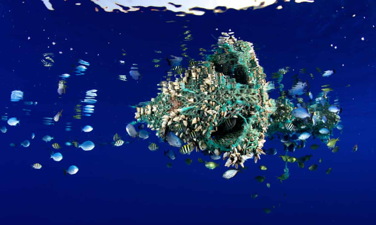 Ocean debris floating off coast of Hawaii has become home to many fish and invertebrates.