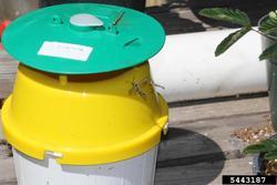 bucket trap. Whitney Cranshaw. Colorado State