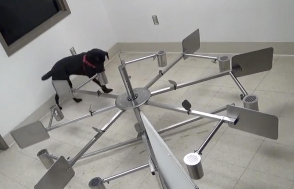 SLF canine detection training 2