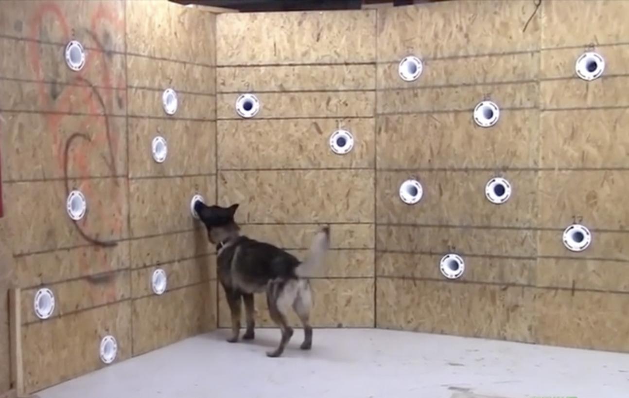 SLF canine detection training