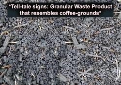 Jumping worm- granular waste KNK