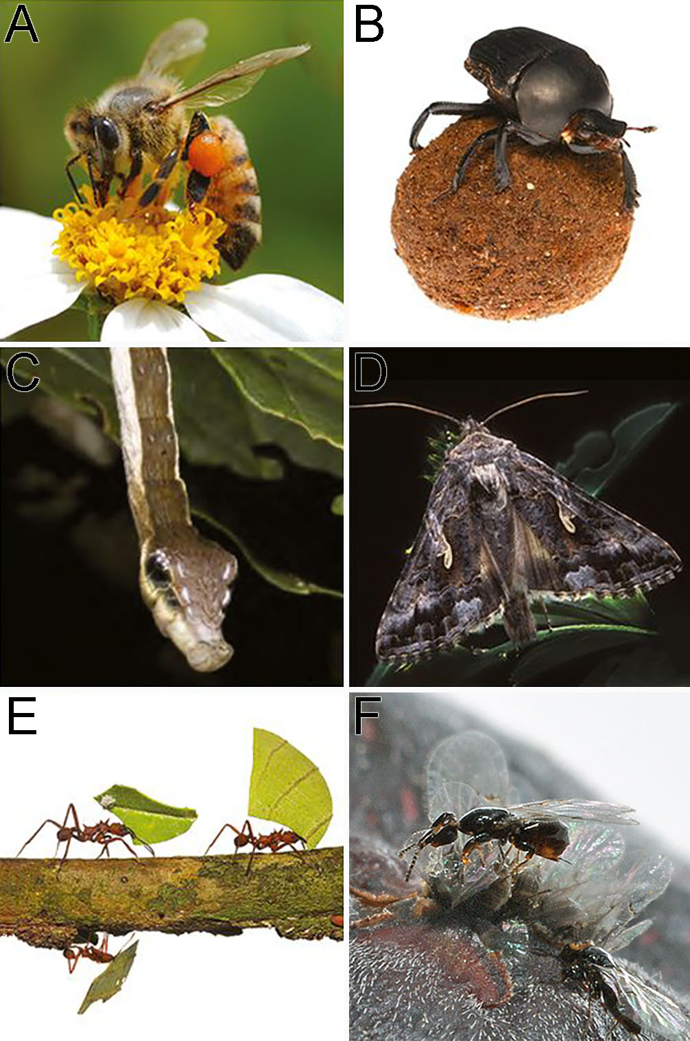 Examples of insects that are beneficial to humans and environment