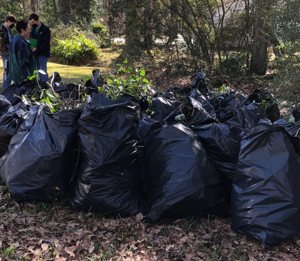 Invasive plant debris removed by The Woodlands Task Force MLK workday