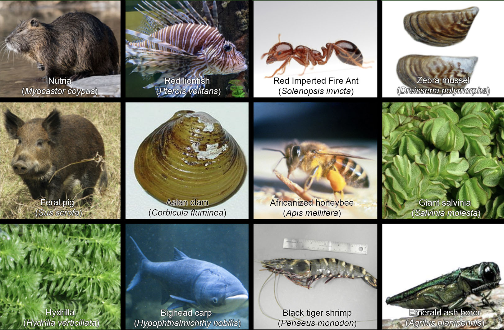 Texas invasive. modification of image from sporcle.com