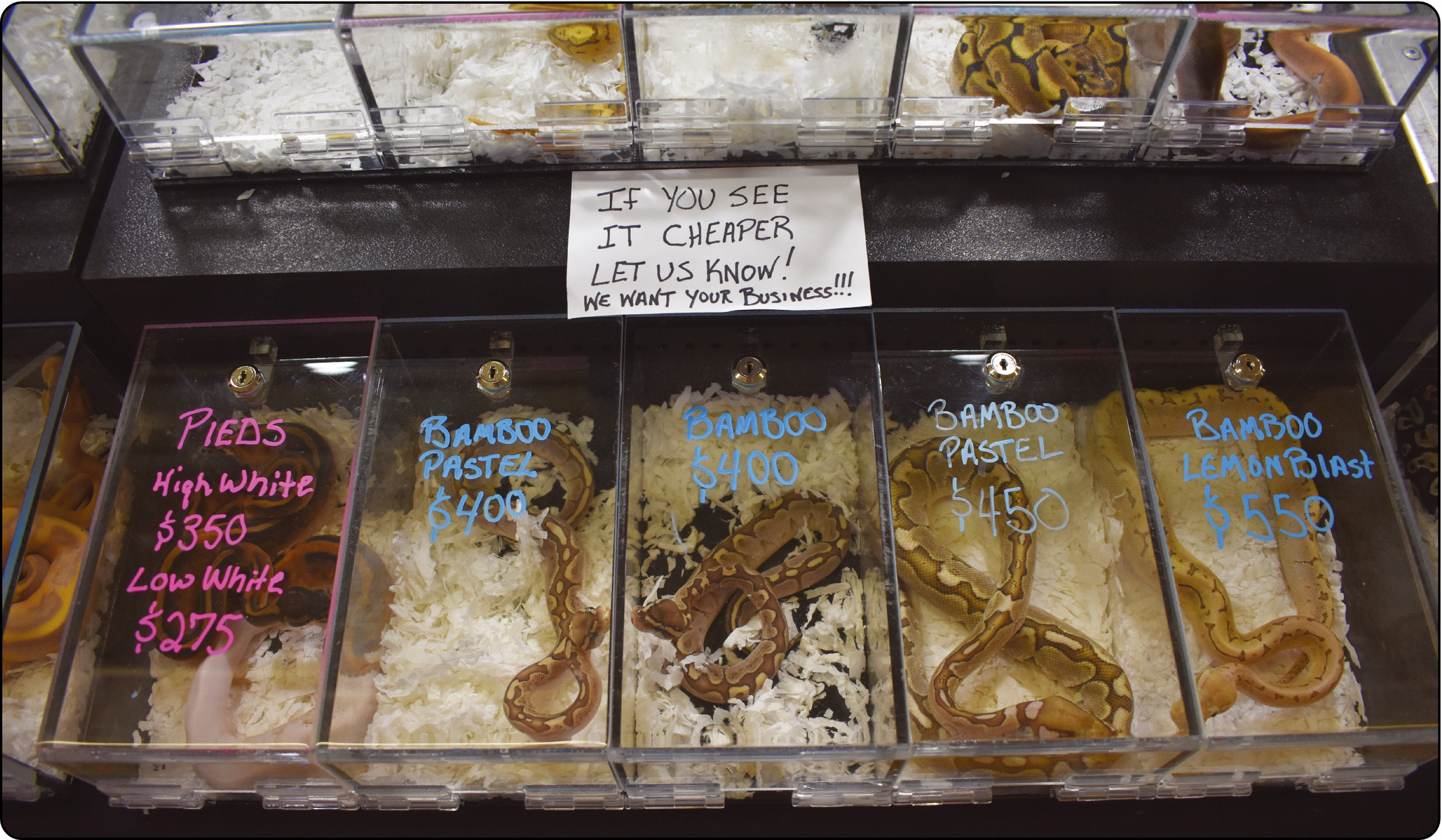 Lockwood et al 2019 image of exotic reptiles being sold at an expo