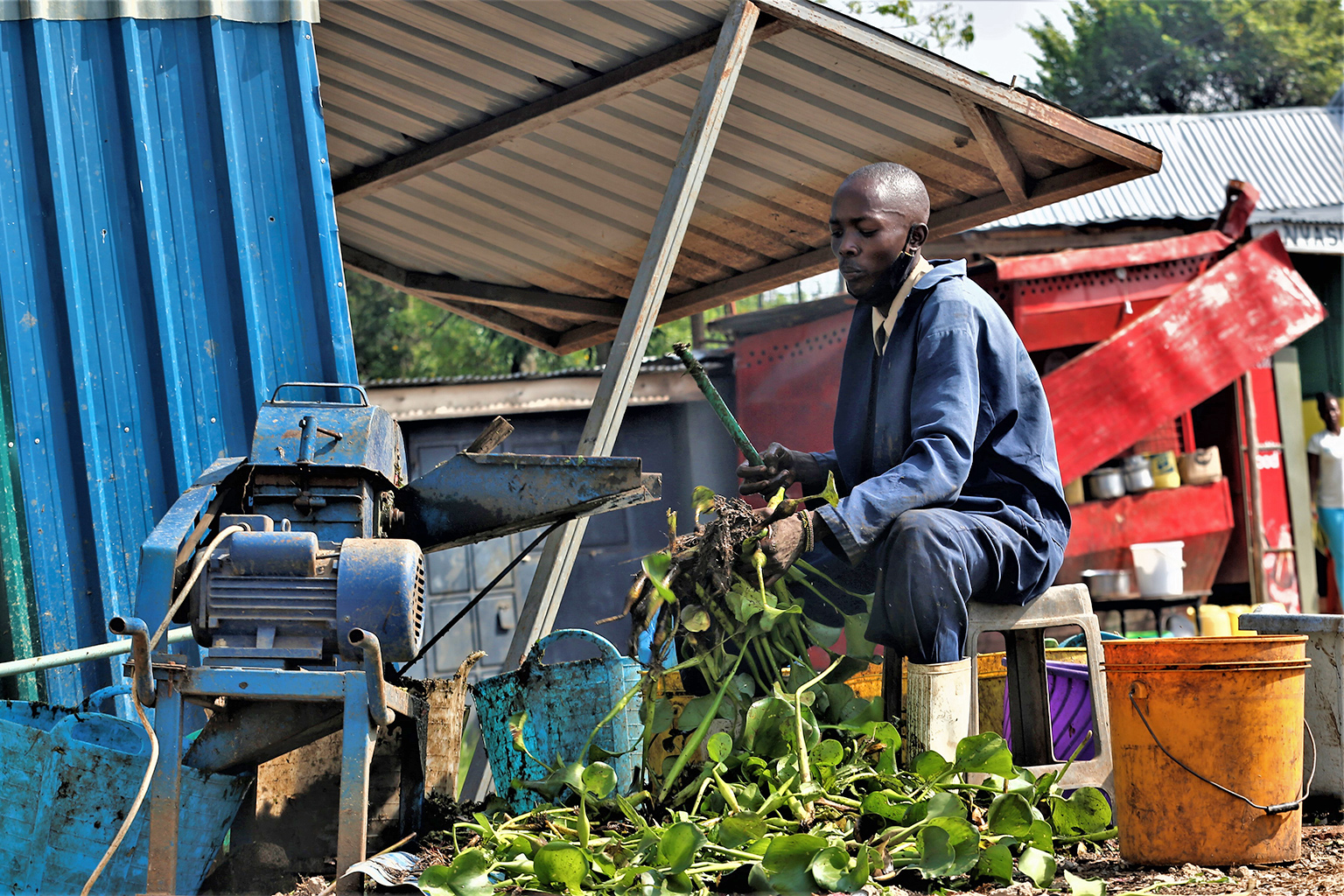 crushing water hyacinth into pulp for biogas digesters. credit Anthony Langat.