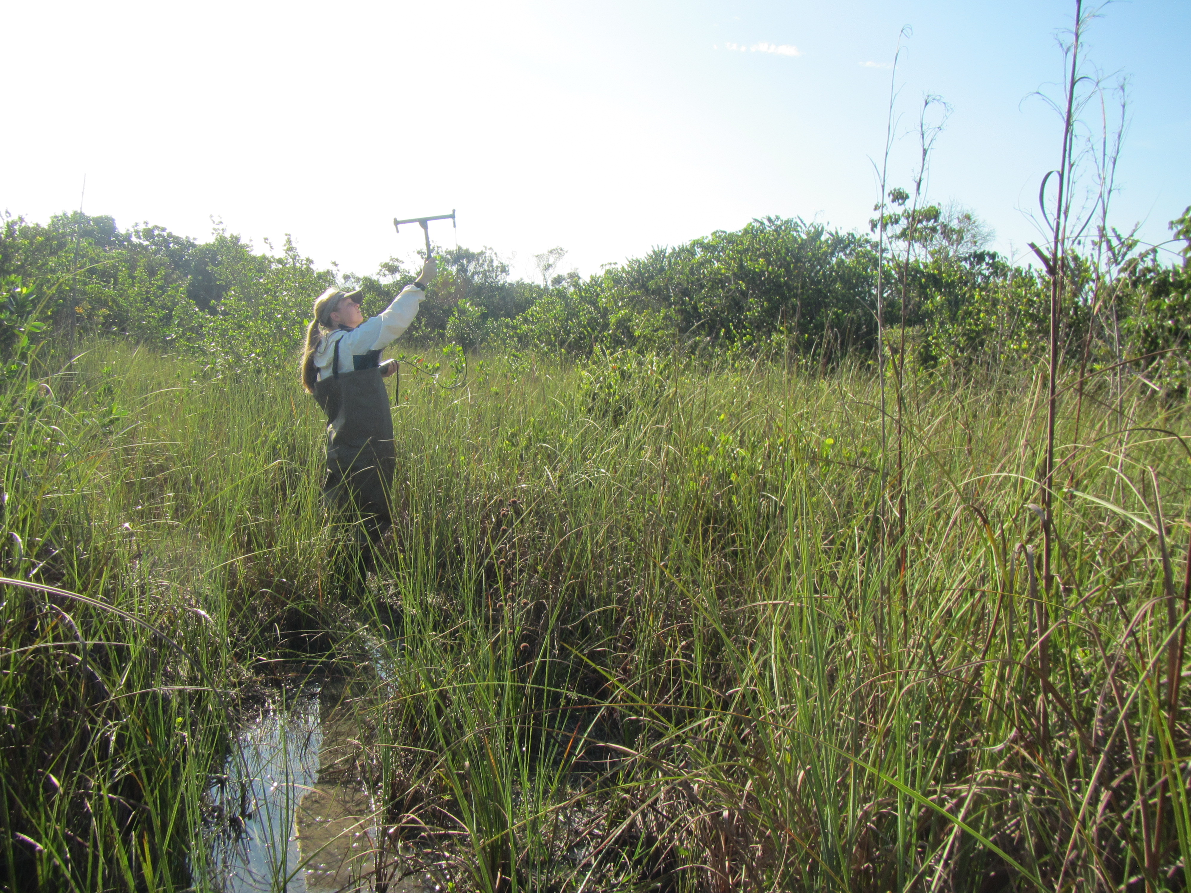 USGS scientinst conducts radio telemetry on Argentine black-and-white tegus in the Florida Everglades.