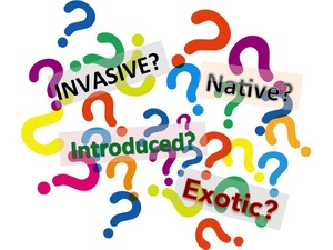 Invasives terms